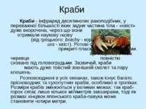 Краби Краби - інфраряд десятиногих ракоподібних, у переважної більшості яких ...