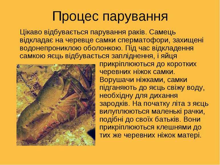 Процес парування Цікаво відбувається парування раків. Самець відкладає на чер...