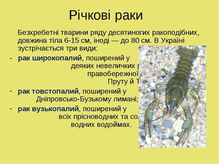 Річкові раки Безхребетні тварини ряду десятиногих ракоподібних, довжина тіла ...