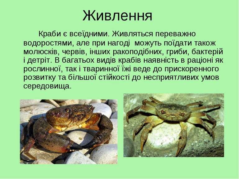 Живлення Краби є всеїдними. Живляться переважно водоростями, але при нагоді м...