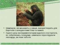 Шимпанзе, які мешкають у савані, використовують для боротьби з конкурентами г...