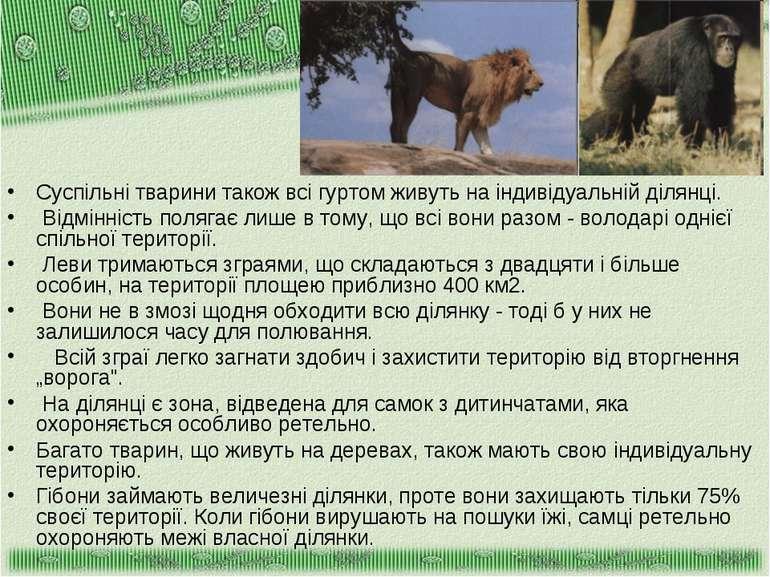 Суспільні тварини також всі гуртом живуть на індивідуальній ділянці. Відмінні...