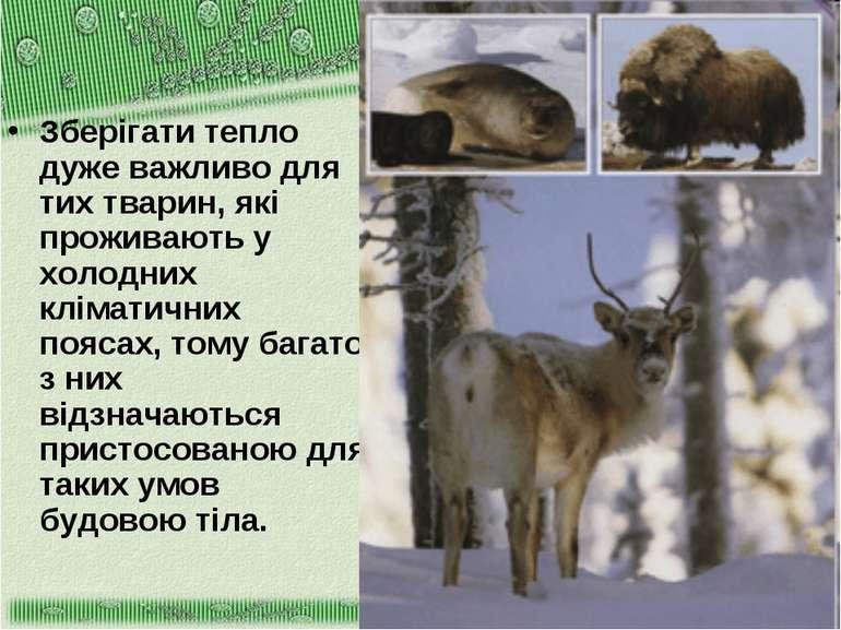 Зберігати тепло дуже важливо для тих тварин, які проживають у холодних клімат...