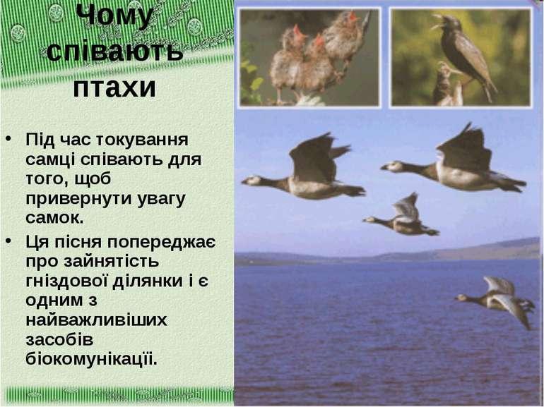 Чому співають птахи Під час токування самці співають для того, щоб привернути...
