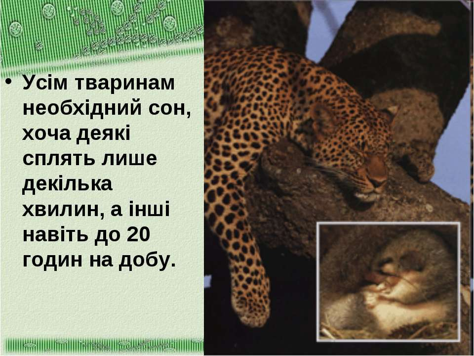 Усім тваринам необхідний сон, хоча деякі сплять лише декілька хвилин, а інші ...