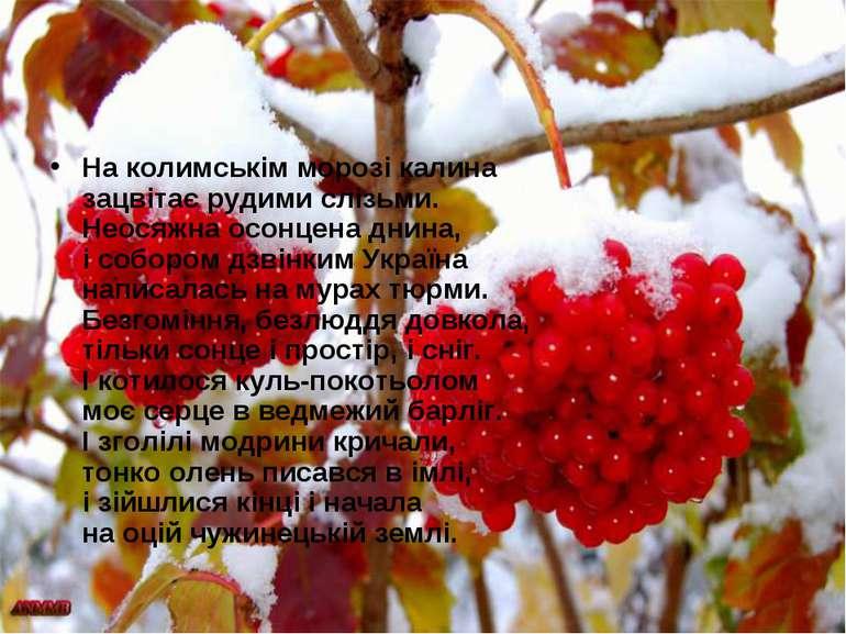На колимськім морозі калина зацвітає рудими слізьми. Неосяжна осонцена днина,...