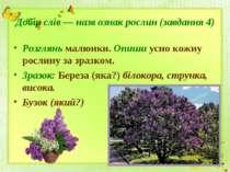 Добір слів — назв ознак рослин (завдання 4) Розглянь малюнки. Опиши усно кожн...
