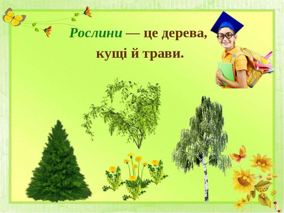 Рослини — це дерева, кущі й трави.