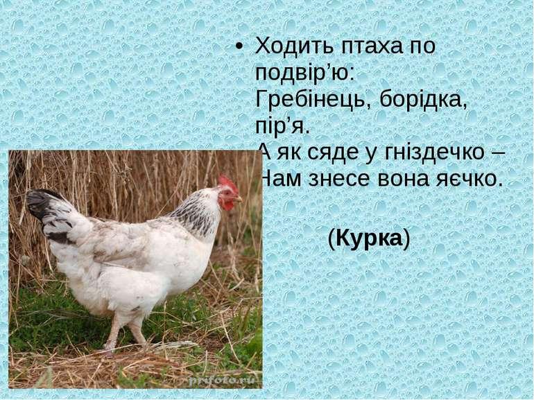 Ходить птаха по подвір'ю: Гребінець, борідка, пір'я. А як сяде у гніздечко – ...
