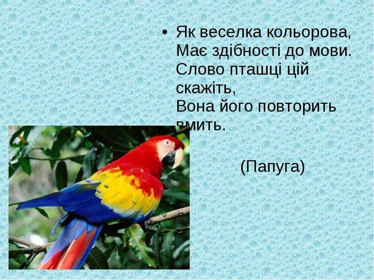 Як веселка кольорова, Має здібності до мови. Слово пташці цій скажіть, Вона й...