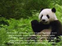 Як більшість ведмедів, вона є всеїдною твариною та в її раціон входять, окрім...