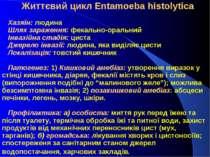 Життєвий цикл Entamoeba histolytica Хазяїн: людина Шлях зараження: ...