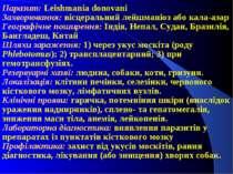 Паразит: Leishmania donovani Захворювання: вісцеральний лейшманіоз або кала-а...