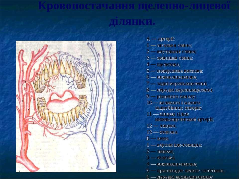 Кровопостачання щелепно-лицевої ділянки. А — артерїї: 1 — загальна сонна; 2 —...
