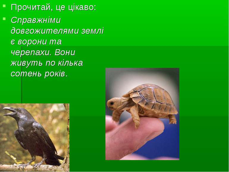 Прочитай, це цікаво: Справжніми довгожителями землі є ворони та черепахи. Вон...