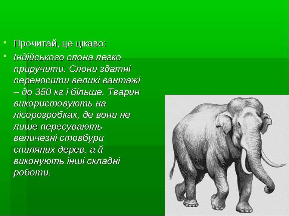 Прочитай, це цікаво: Індійського слона легко приручити. Слони здатні переноси...