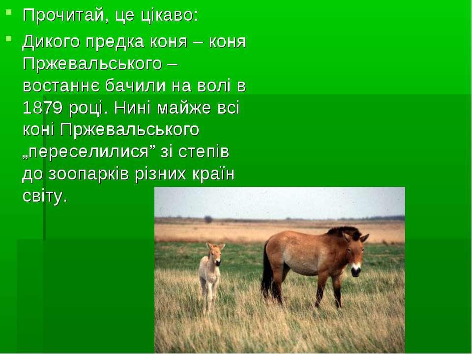 Прочитай, це цікаво: Дикого предка коня – коня Пржевальського – востаннє бачи...