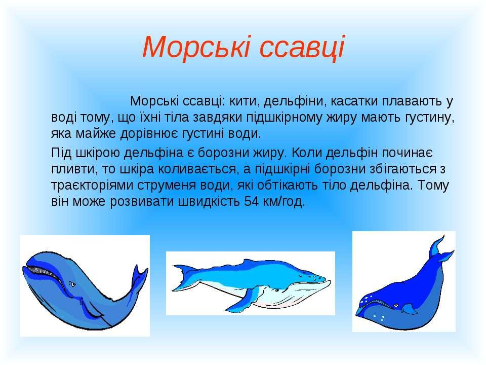 Морські ссавці Морські ссавці: кити, дельфіни, касатки плавають у воді тому, ...