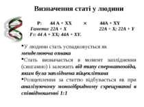 Визначення статі у людини P: 44 A + XX 44A + XY Гамети: 22A + X 22A + X; 22A ...