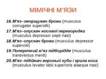 МІМІЧНІ М'ЯЗИ М'яз–зморщувач брови (musculus corrugator supercilii) М'яз–опус...