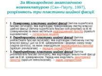 За Міжнародною анатомічною номенклатурою (Сан–Паулу, 1997), розрізняють три п...