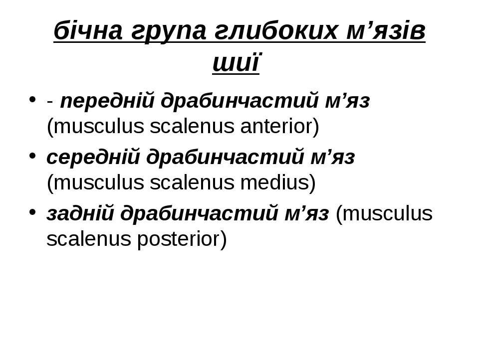 бічна група глибоких м'язів шиї - передній драбинчастий м'яз (musculus scalen...