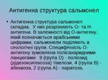 Антигенна структура сальмонел Антигенна структура сальмонел складна. У них ро...