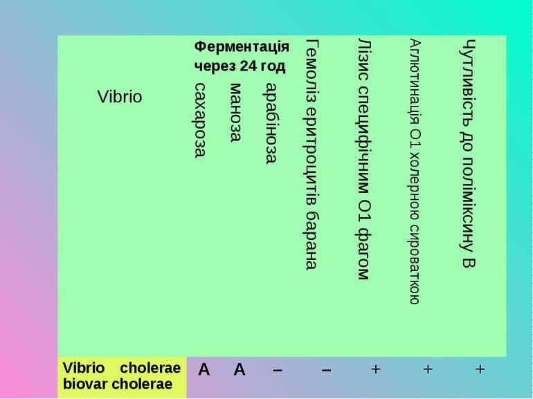 Vibrio Ферментація через 24 год Гемоліз еритроцитів барана Лізис специфічним ...