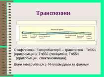 Транспозони Стафілококи, Ентнробактерії – транспозон Tn551 (еритроміцин), Tn5...