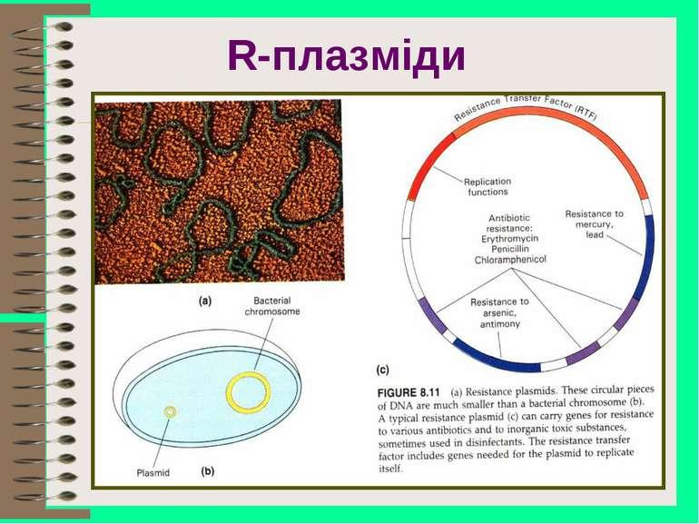 R-плазміди