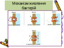 Механізм живлення бактерій