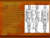 А н т р о п о м е т р і я дає можливість визначити кількісні характеристики ф...