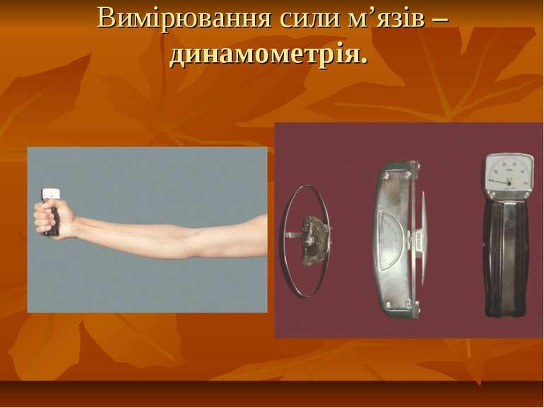 Вимірювання сили м'язів – динамометрія.