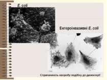 E. coli Ентероінвазивні E. coli Спричиняють хворобу подібну до дизентерії