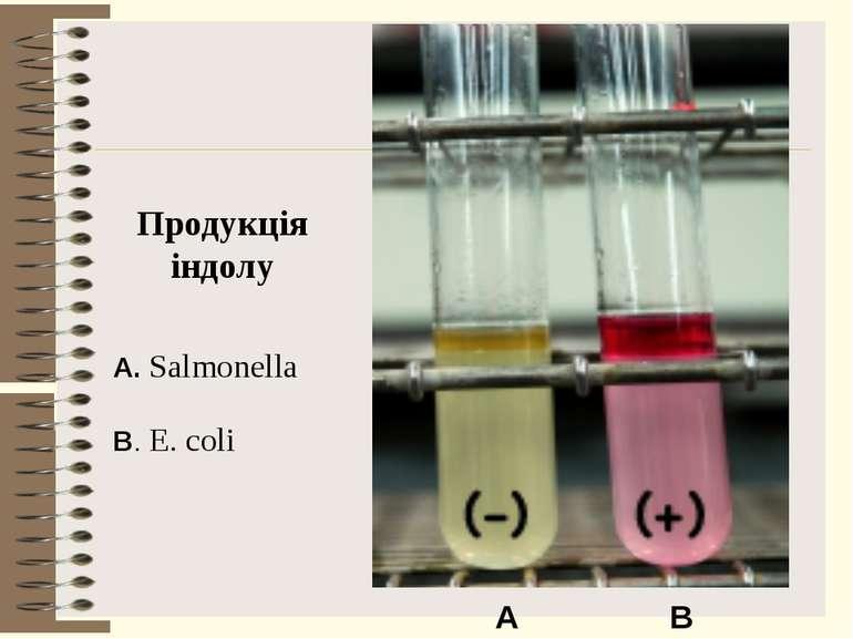 Продукція індолу B. E. coli A. Salmonella A B