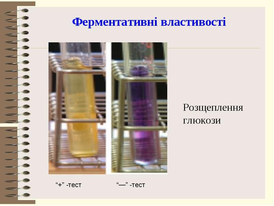 """Ферментативні властивості Розщеплення глюкози """"+"""" -тест """"—"""" -тест"""