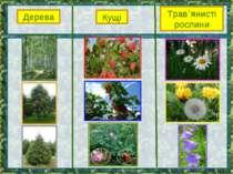 Дерева Кущі Трав`янисті рослини