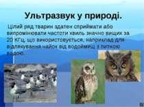Ультразвук у природі. Цілий ряд тварин здатен сприймати або випромінювати час...