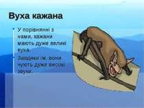Вуха кажана У порівнянні з нами, кажани мають дуже великі вуха. Завдяки їм, в...
