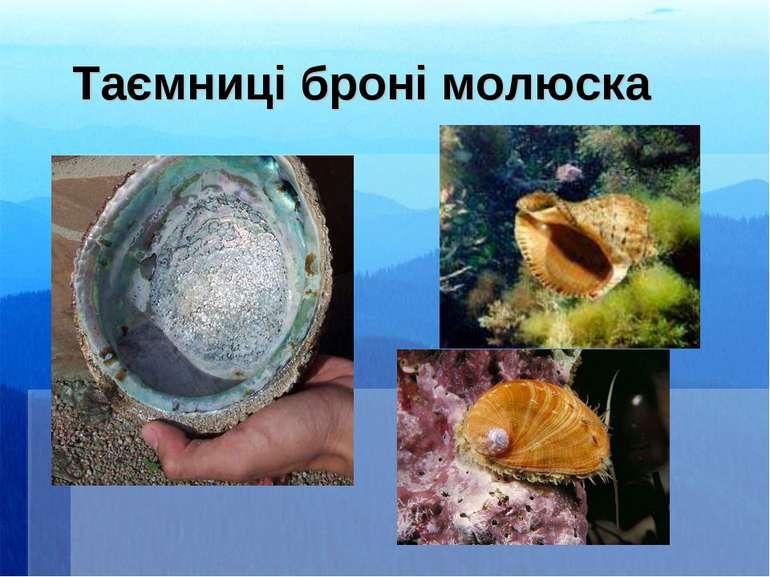 Таємниці броні молюска