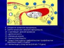 8 - утворення чоловічого пронуклеуса, 9 - злиття чоловічого і жіночого пронук...