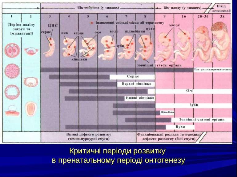 Критичні періоди розвитку в пренатальному періоді онтогенезу