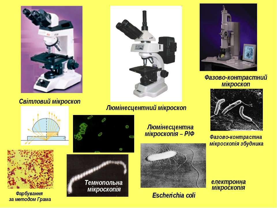 Люмінесцентний мікроскоп Фазово-контрастний мікроскоп Світловий мікроскоп Фаз...