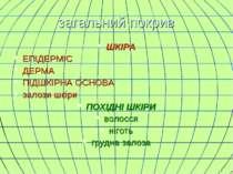 загальний покрив ШКІРА ЕПІДЕРМІС ДЕРМА ПІДШКІРНА ОСНОВА залози шкіри ПОХІДНІ ...