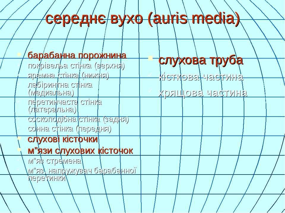 середнє вухо (auris media) барабанна порожнина покрівельа стінка (верхня) яре...