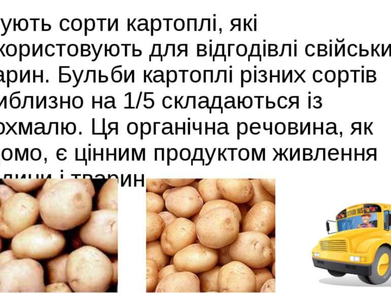 Існують сорти картоплі, які використовують для відгодівлі свійських тварин. Б...