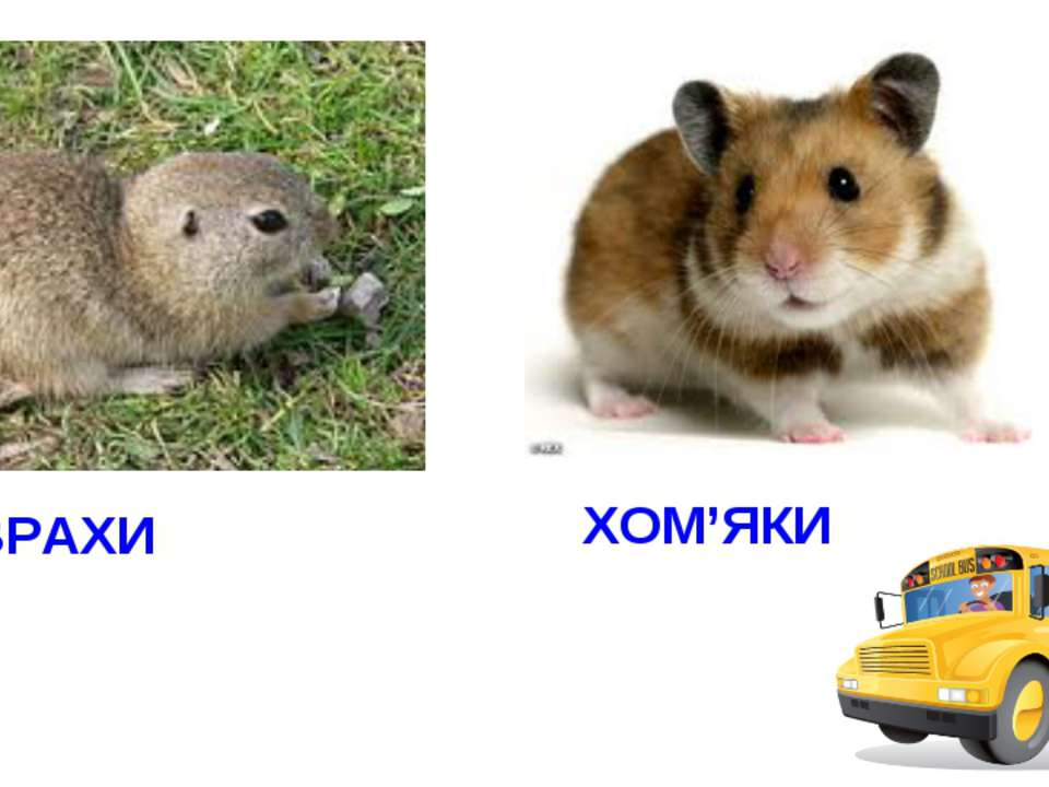 ХОВРАХИ ХОМ'ЯКИ
