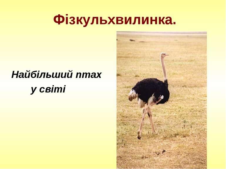 Фізкульхвилинка. Найбільший птах у світі