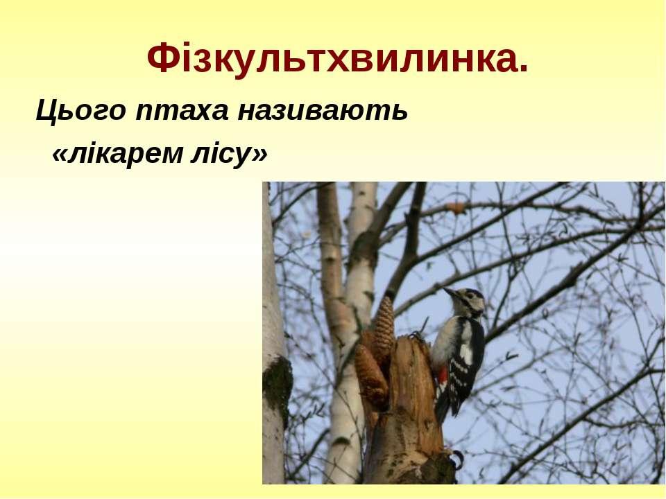 Фізкультхвилинка. Цього птаха називають «лікарем лісу»