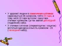 У здорової людини в соматичних клітинах нараховується 46 хромосом, тобто 23 п...